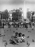 Pigeons Trafalgar 1950