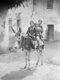 Egyptian Donkey Ride