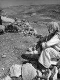 Israeli Shepherd