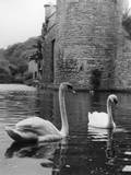 Swans and Moat