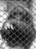 Caged Orangutan