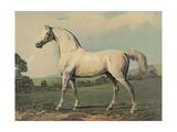 Mambrino (Racehorse)