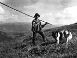 Russian Shepherd