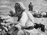 Israeli Shepherds