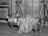 Lounge Lizard 1930s