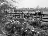 Spring Farming Scene