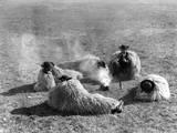 Hungarian Herdsmen
