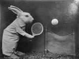 Bunny Tennis