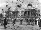 Trafalgar Square Birds