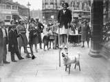 Dog on Stilts!
