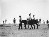 Donkeys at Weston