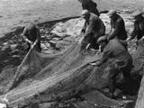 Salmon in Nets