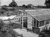 Greenhouse  Fox Ash