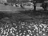Regents Park 1950S