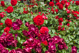 Bushel Of Roses Photo Print Poster