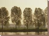 A Row of Poplar Trees Along the Banks of the Rhine River