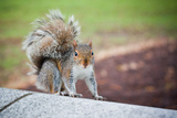 Traveling Squirrel Photo Print Poster