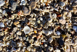 Array of Seashells Photo Print Poster