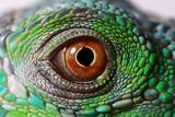 Iguana Eye Papier Photo par NagyDodo