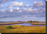Saltwater marshes at Cedar Key  Florida