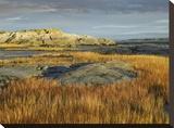 Tidal marsh  Riviere-Trois-Pistoles  Quebec  Canada
