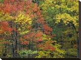 Fall foliage at Fishers Gap  Shenandoah National Park  Virginia