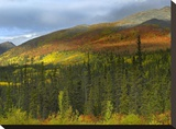 Boreal forest beneath Goldensides Mountain  Tombstone Territorial Park  Yukon Territory  Canada