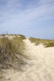 Sand Dunes and Dune Grass  Cap Ferret  Gironde  Aquitaine  France