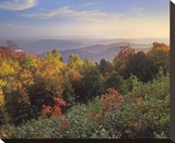 Deciduous forest in autumn  Blue Ridge Mountains from Doughton Park  North Carolina