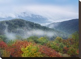 Broadleaf forest in fall colors  Skyline Drive  Shenandoah National Park  Virginia