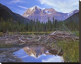 Beaver dam and Mount Robson  Mount Robson Provincial Park  BC  Canada