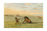 Racial  Wild Horse C1830