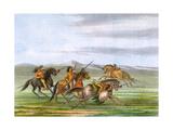 Racial  Comanche Horses