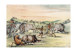 Racial  Hunting Buffalo