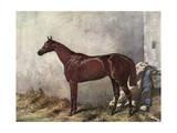 Hermit (Racehorse) 1867