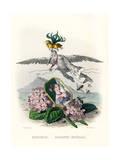 Grandville Hortensia