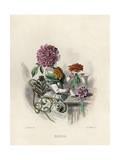 Grandville Dahlia 1847