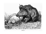 German Boar Held at Verdun - Cartoon
