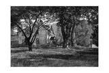 Alcott  Concord Mass Home
