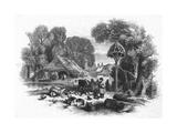 Farmyard Scene  C 1860