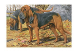 Two Bloodhounds Standing