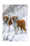 Two St Bernards in Snow