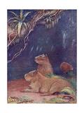 Animal  Capybara 1909