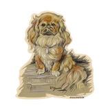Dogs  Pekingese  Dawson