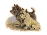 Dogs  Cairns  Dawson