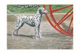 Dalmatian by Coach Wheel