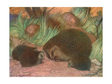 Hedgehog and Young 1909