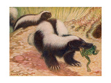 Animals  Skunk 1909