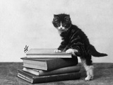 Tabby Kitten on Books