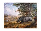 The Black Rhinoceros Charging